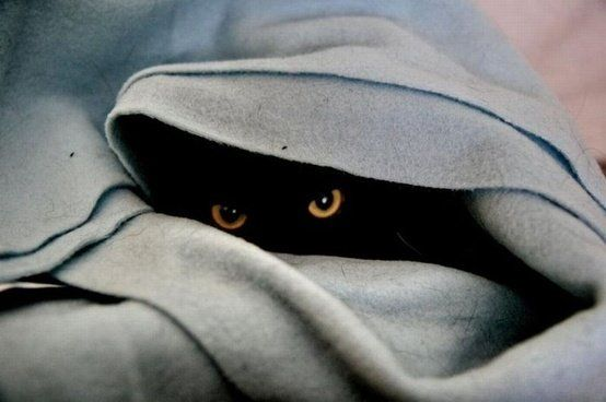 cat-kitty-katze-black-hiding-blanket-eyes-staring-hunter-lurk-watch-ambush-waiting.jpg